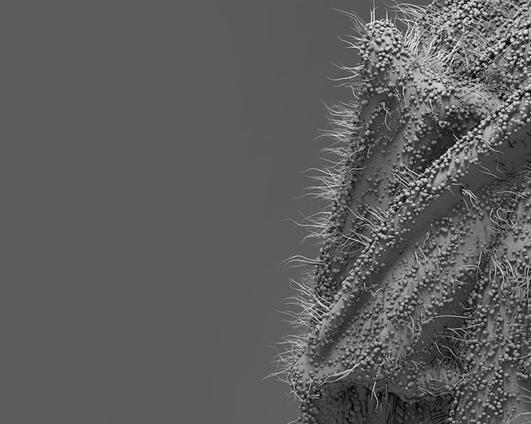 hairy object with rough material in greyscale